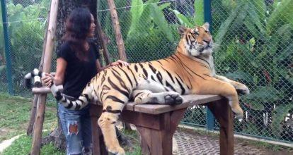tiger-park-pattaya-1