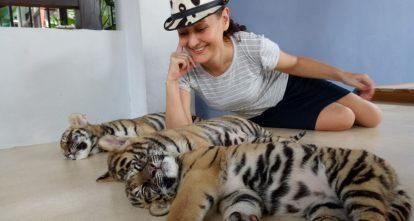 tiger-park-pattaya-4
