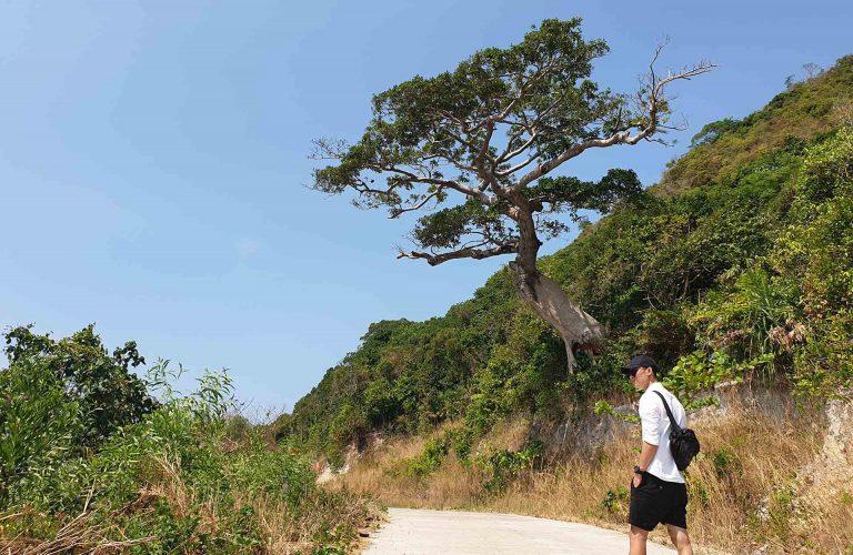 du lịch nam du tự túc nên đi đâu chơi? cây cô đơn