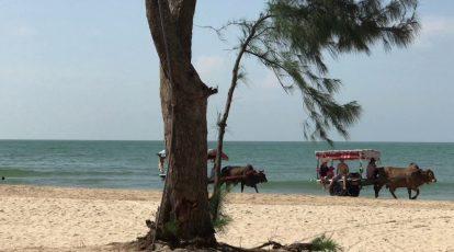 cưỡi xe bò ở bãi biển cam bình