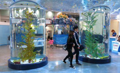 khong-gian-ben-trong-coex-aquarium