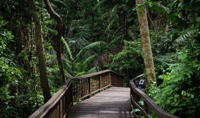 loi-di-trong-monkey-forest-tai-bali