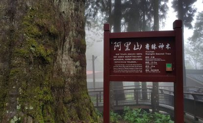 sacred-tree-tai-a-ly-son