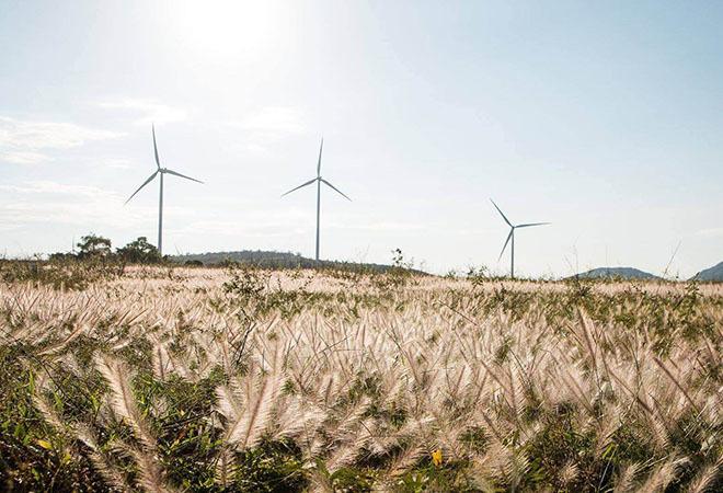 Cánh đồng điện gió Tuy Phong