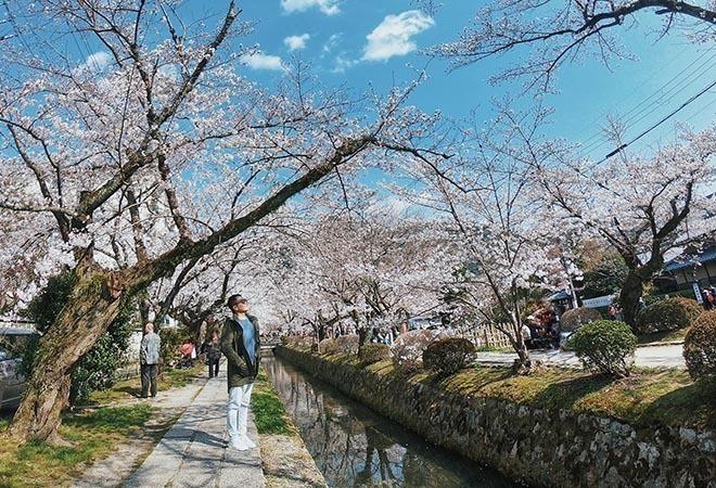 Du lịch Nhật Bản săn hoa anh đào tại Kyoto – Osaka 4 ngày 4 đêm