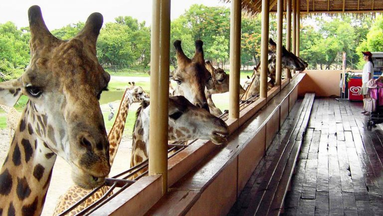 tham-quan-vuon-thu-safari-world-o-bangkok