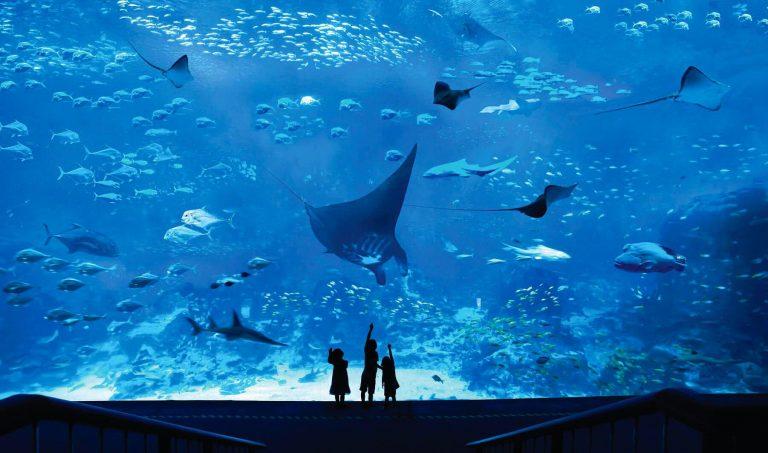 thuy-cung-sea-aquarium-sentosa