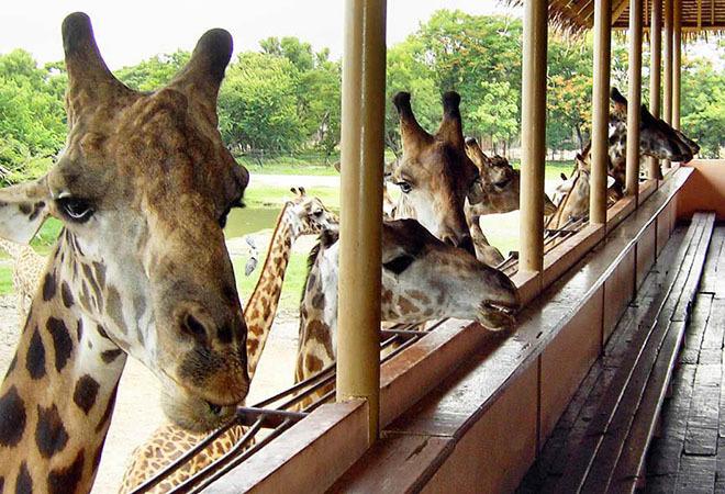 Vé tham quan vườn thú Safari World ở Bangkok