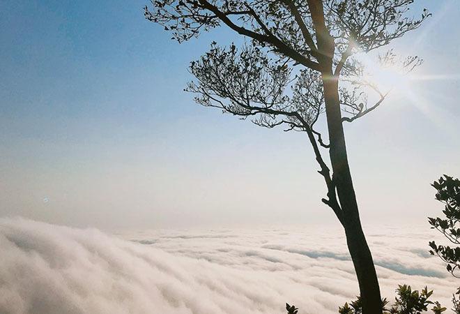Một ngày săn mây tại vườn quốc gia Ba Vì