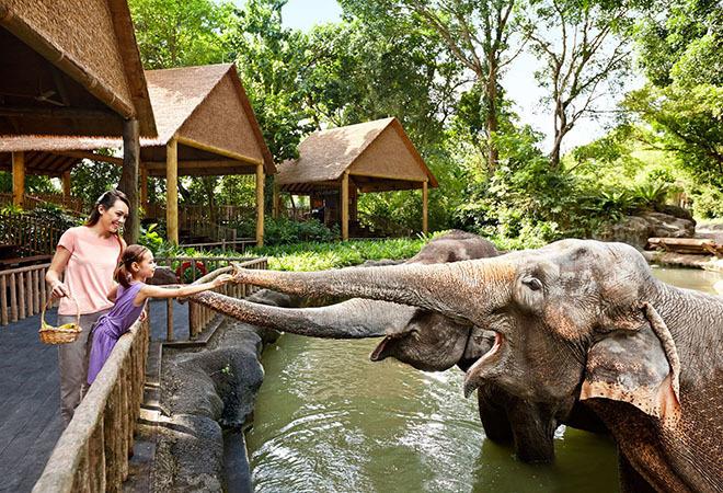 Vé sở thú Singapore Zoo