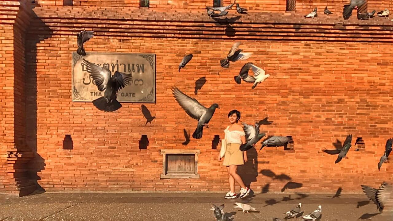 chụp hình với chim bồ câu tại pae gate