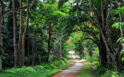 đường vào vườn quốc gia cúc phương