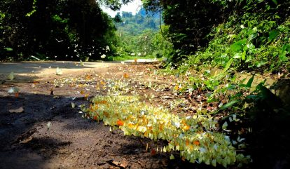 vương quốc bướm tại vườn quốc gia cúc phương
