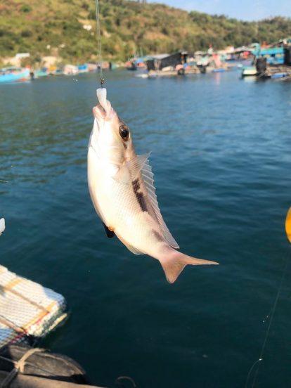 trải nghiệm câu cá biển trên đảo hòn sơn