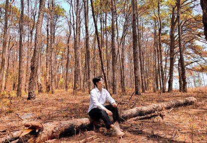 du lịch đắk nông nên đi đâu chơi? rừng thông đắk nông