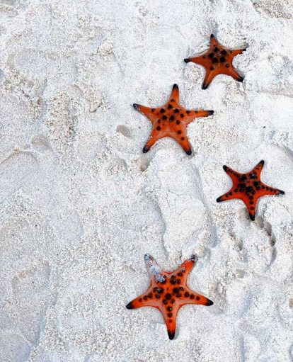 chiêm ngưỡng sao biển tại làng chài rạch vẹm