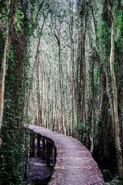 con đường xuyên rừng tràm tại làng nổi tân lập