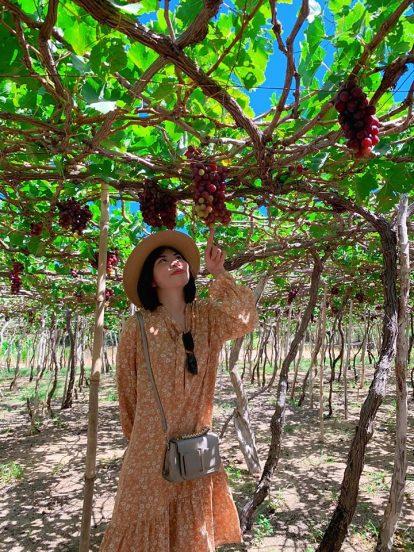 kinh nghiệm du lịch nha trang tự túc: khám phá vườn nho ninh thuận