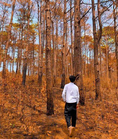 tham quan rừng thông đắk nông