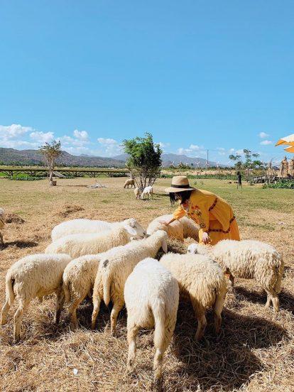 du lịch nha trang tự túc nên đi đâu chơi? đồng cừu