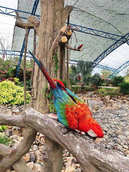 vườn chim trong vinpearl nha trang