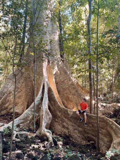 cây tùng 500 tuổi tại vườn quốc gia nam cát tiên